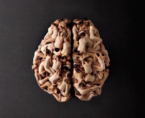 Living brain by Ernst Meisner
