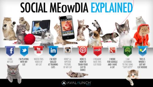 social-media-explained-by-cute-cats_5127ca6880db9_w587