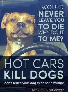 dog-car-01