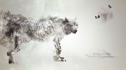 light_evolution_artwork_speedart_wolves_1920x1080_wallpaper_www.animalhi.com_72