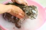 kedi-nasil-yikanir-1