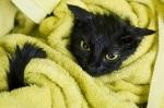 kedi-nasil-yikanir-2