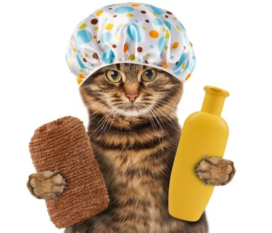 kedi-nasil-yikanir-3
