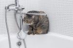 kedi-nasil-yikanir-4