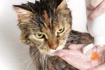 kedi-nasil-yikanir-5