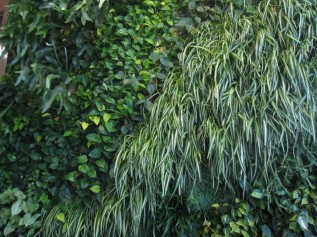 green-wall-945x709