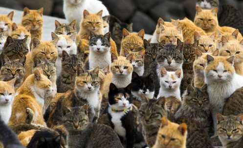 cat_island_japan_6